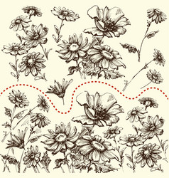 floral set a collection hand drawn flowers vector image