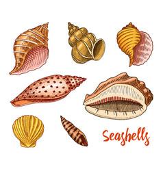 Seashells set or mollusca different forms sea vector