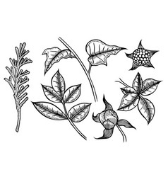 set of plants painted by hand vector image