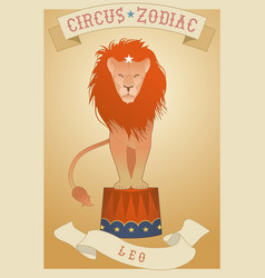 zodiac circus leo sign circus lion showing off on vector image