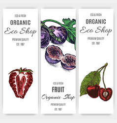 banner fruit for eco shop vector image