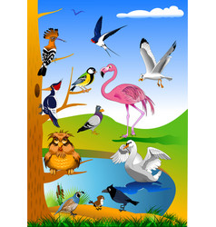 Beautiful birds in nature vector