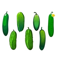 Fresh prickly green cucumber vegetables vector image