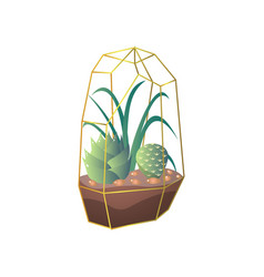 green succulent and cactus plant in terrarium vector image