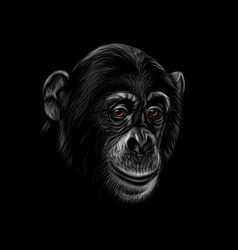 portrait of a chimpanzee head on a black vector image