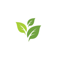 tree leaf icon template vector image