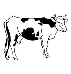 drawing a cow vector image