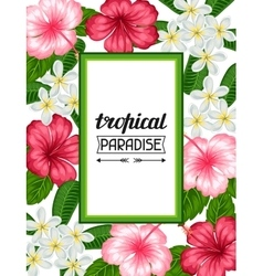 Frame with tropical flowers hibiscus and plumeria vector