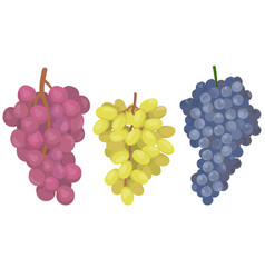 Grapes different varieties vector
