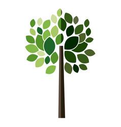 Tree plant with leaves design vector