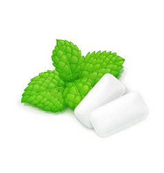 Two chewing gum and mint leaf vector
