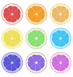 lemon orange grapefruit and lime vector image