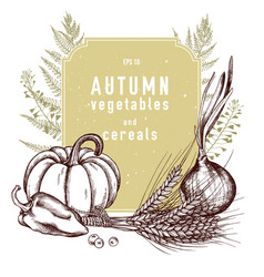 Collection of hand drawn autumn vegetables vector