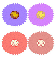 decorative aster flowers top view design elements vector image