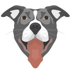 Dog pitbull vector