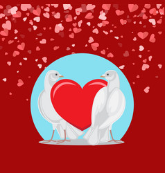 Pair of white doves and red love symbol on blue vector