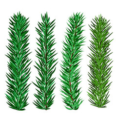 Set of spruce and fir tree branches - christmas vector
