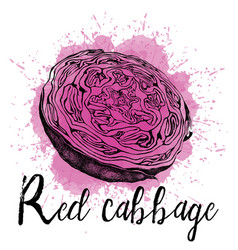A red cabbage in hand drawn vector