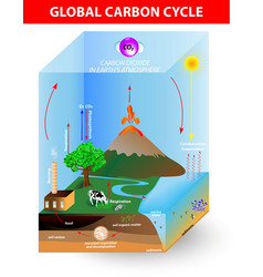 Carbon cycle diagram vector