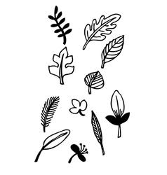Freehand leaf design vector