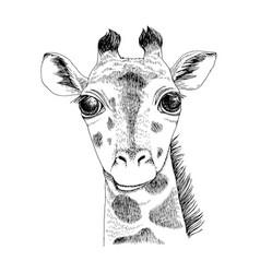 hand drawn portrait funny giraffe baby vector image