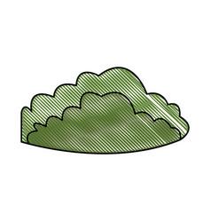 drawing green bush foliage natural vector image vector image