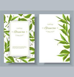 Green tea banners vector