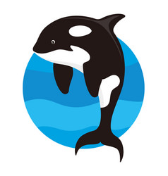 Killer whale isolated vector