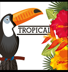 tropical flower leaves animal card vector image