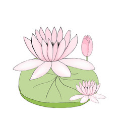 color of lotus bud and leaf vector image