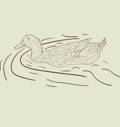 wild duck hand-painted vector image