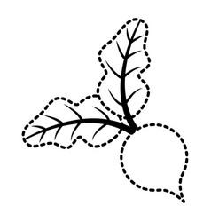 beet leaves vegetable fresh diet food vector image