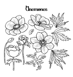 Collection of graphic anemones vector image