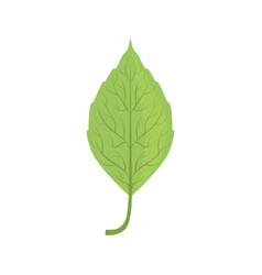 Elm tree green leaf vector