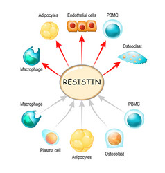 Resistin is a hormone from adipose tissue vector
