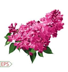 Spring izolate lilac flower for the design vector