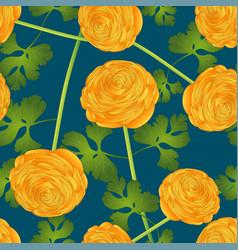 Yellow ranunculus flower on indigo blue background vector