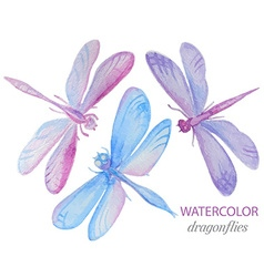 Collection of watercolor dragonflies vector image