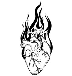 human heart black line tattoo vector image