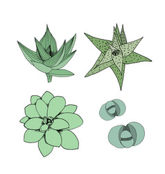 set of succulents hand drawn botanical art vector image