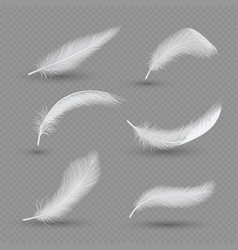 white birds feather icon set realistic vector image vector image
