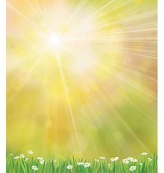 sun grass background vector image vector image