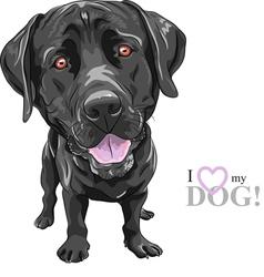 Black dog breed labrador retriever vector