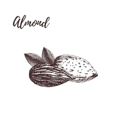 Almond hand drawn sketch vector image