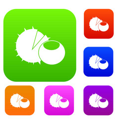 hazelnuts set collection vector image