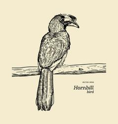 Oriental pied hornbill hand draw sketch vector