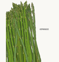 Asparagus vegetable stem isolated sketch bunch of vector