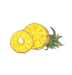 Detailed botanical drawing of cut fresh organic vector