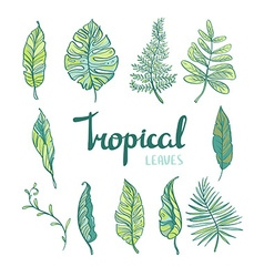 Set of tropical leaves isolated on white vector