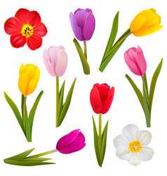 Tulip icons vector